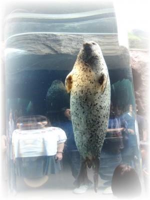 旭山動物園01高坂ホーム