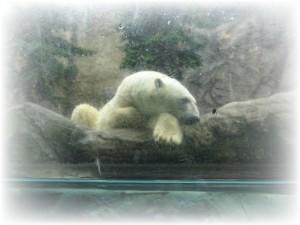 旭山動物園03高坂ホーム