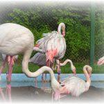 ✿おびひろ動物園2018夏期開園✿ゾウ✿ライオン✿フラミンゴ✿開園時間9時✿