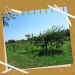 ✿最新情報✿2018年8月ブルーベリー狩り清水町いずみ園(*∪ω∪*)無農薬✿ハスカップも美味しい✿夏休み✿