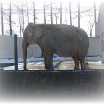 ✿おびひろ動物園ʕ·ᴥ·ʔ夏期開園は4月✿帯広と札幌のアジアゾウの名前(愛称)✿