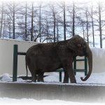 【ありがとう】インドゾウのナナ☆おびひろ動物園