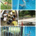 【2020】おびひろ動物園ありがとうナナʕ·ᴥ·ʔ夏期開園中